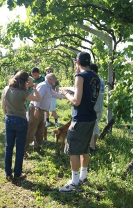 Bonafide Tours group learning about organic farming in Portugal.