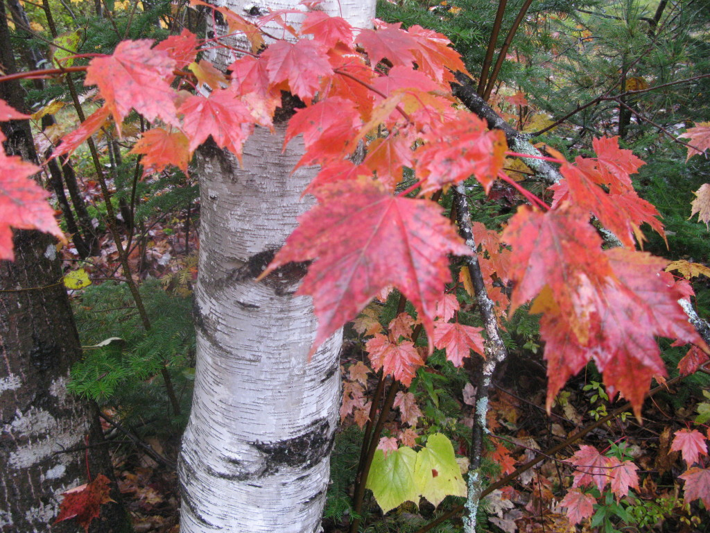 It is time to get close up and personal with fall colors in Vermont!